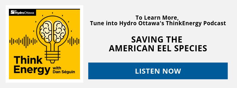 Think Energy Podcast